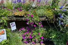 Verkaufsbereich Sommerblumen